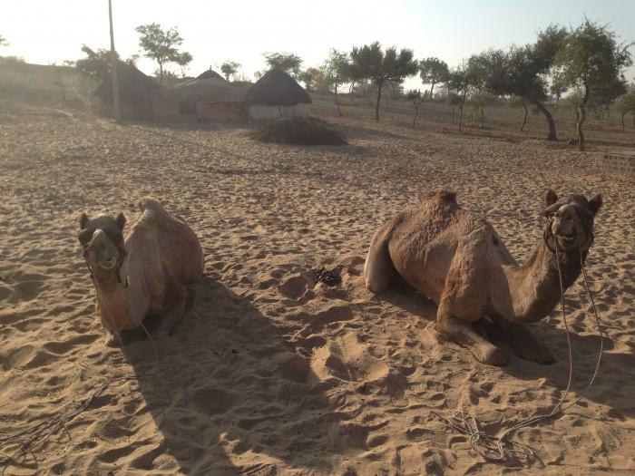 ジョードプルからの砂漠ツアー