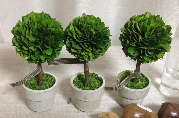置き物(観葉植物)ウッドトピアリー